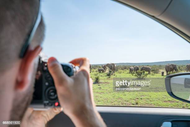 View of a young man taking a picture of an African elephant