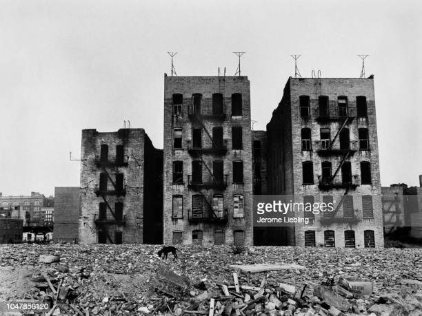 View of abandoned apartment buildings amid rubble in the South Bronx neighborhood New York New York 1977 Visible in the foreground is a stray dog