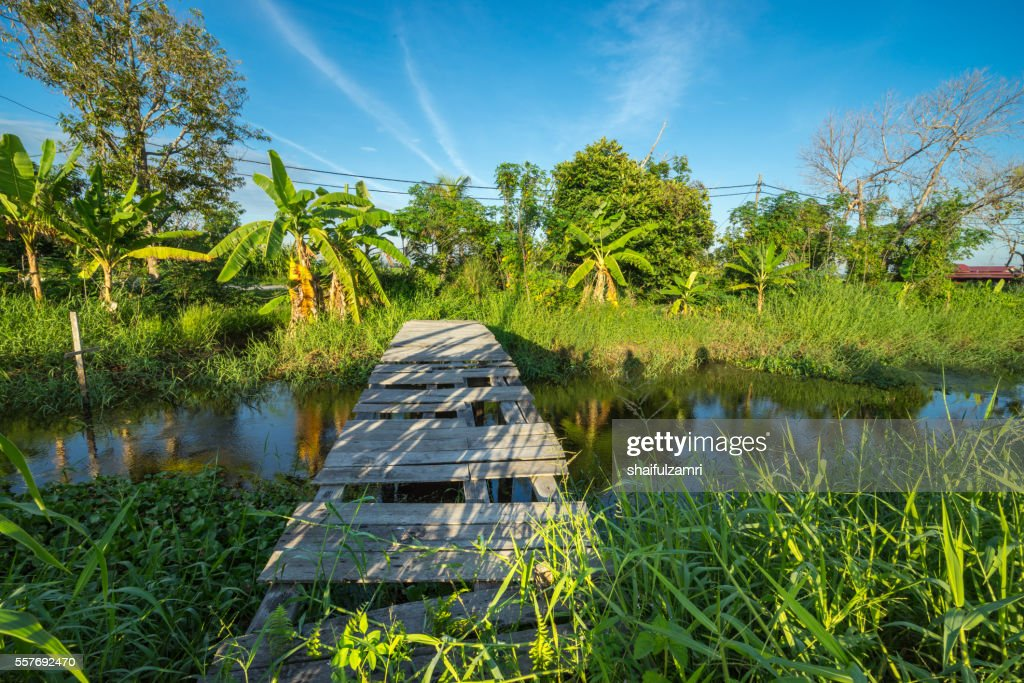 View of abandoned jetty during sunrise in Sungai Besar of Malaysia : Stock Photo