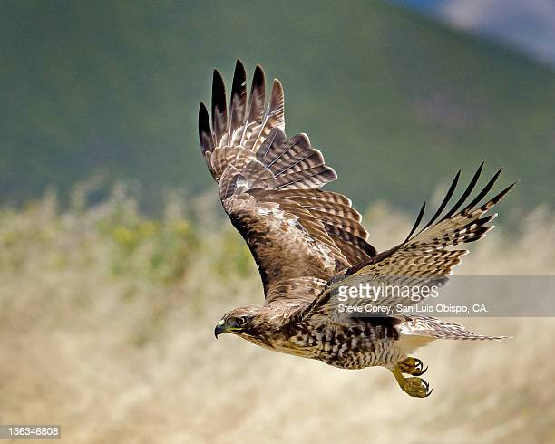 view of airport hawk - hawk stock pictures, royalty-free photos & images