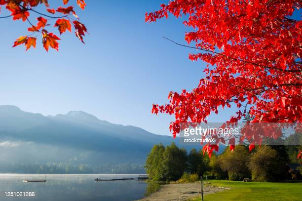 view of alta lake in autumn - maple tree stock pictures, royalty-free photos & images