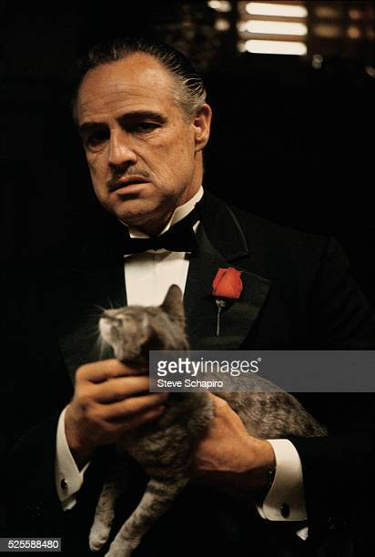 View of American actor Marlon Brando in costume as he holds a cat on the set of the film 'The Godfather' 1972