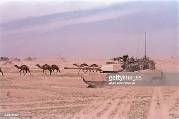 View of an American M1A1 Abrams tank from the First Armored Division as it crosses the desert beside a herd of camels during the Gulf War Iraq March...