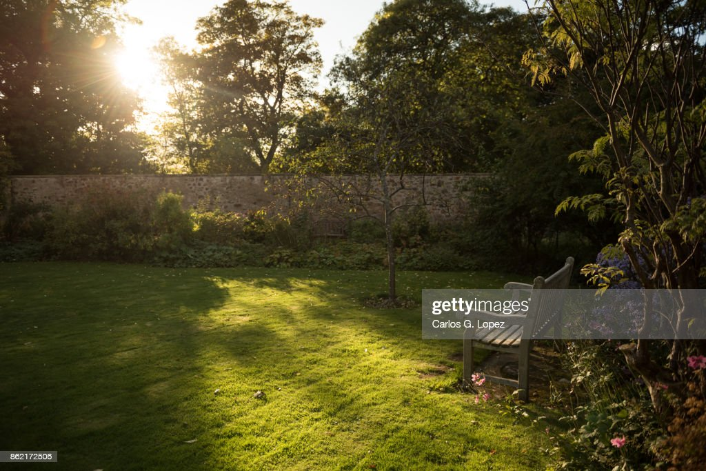 View of an empty wooden bench in the sun near flowers : Stock Photo