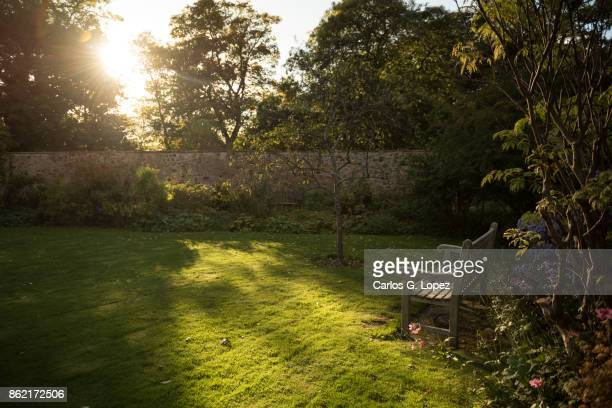 View of an empty wooden bench in the sun near flowers