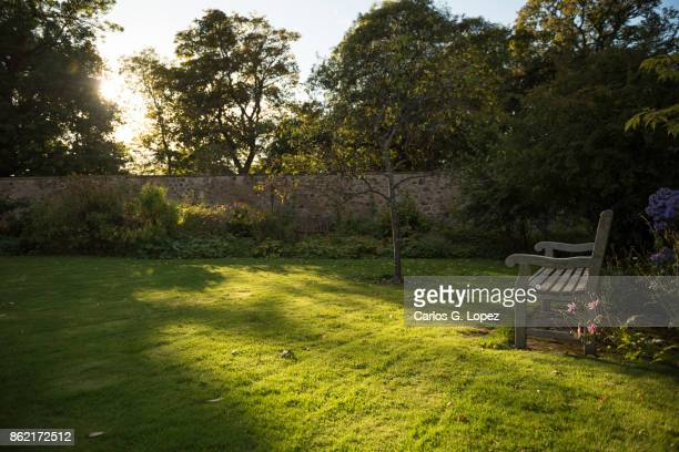 view of an empty wooden bench in the sun near trees and flowers - pelouse photos et images de collection