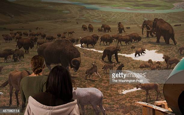 View of an exhibit rendering of prehistoric mammals among them a Wooly Mammoth whose skeleton was deconstructed today at the Smithsonian Museum of...
