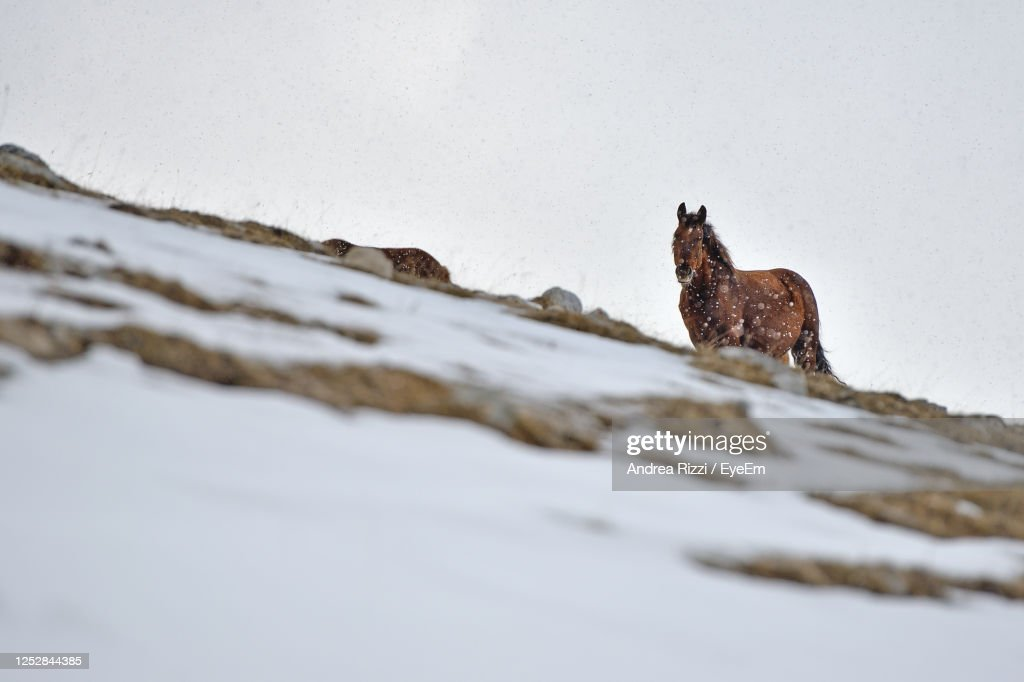 View Of An Horse On Snow Covered Land : Foto stock