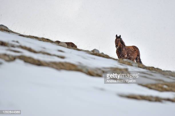 view of an horse on snow covered land - andrea rizzi stock pictures, royalty-free photos & images