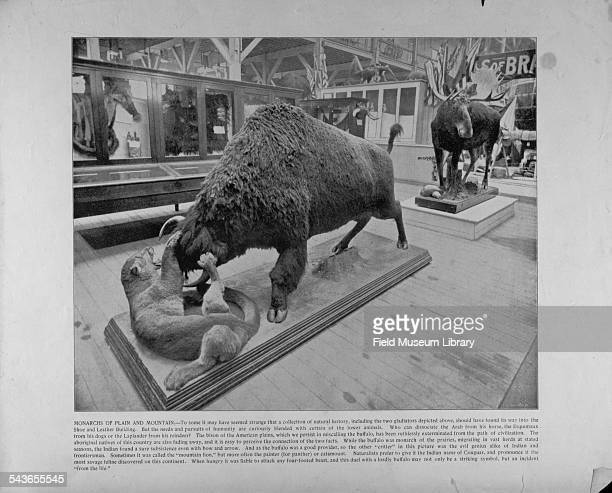 View of an interior exhibit in the Shoe and Leather building of the World's Columbian Exposition Chicago Illinois 1893 It depicts a buffalo and...