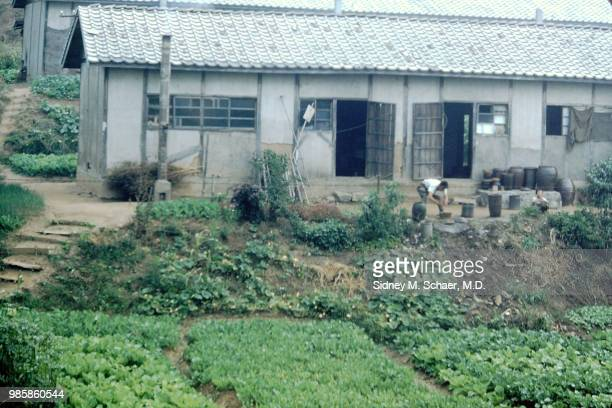 View of an unidentified man as he works in a vegetable garden Inchon South Korea January 1952