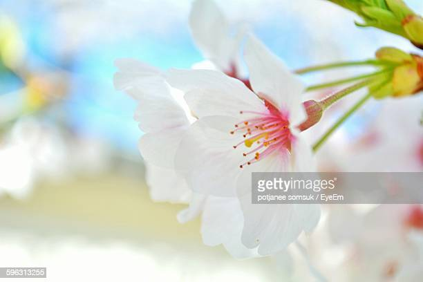 View Of Apple Blossom