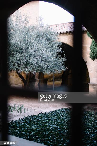 view of architectural space with an olive tree and plants - 100th anniversary stock pictures, royalty-free photos & images