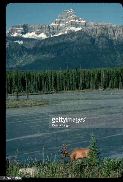 View of Athabasca River and Mountain Behind Canada