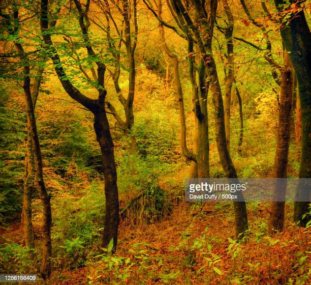view of autumn forest, bolton, uk - lancashire stock pictures, royalty-free photos & images