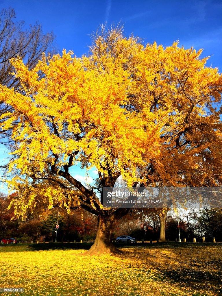 View of autumn tree : Stock Photo