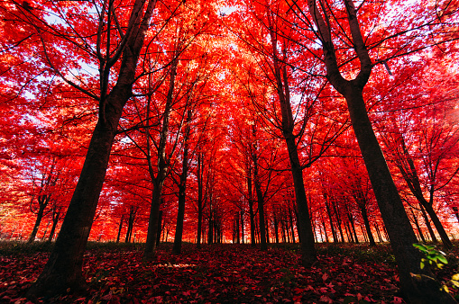 View Of Autumn Trees In Forest - gettyimageskorea