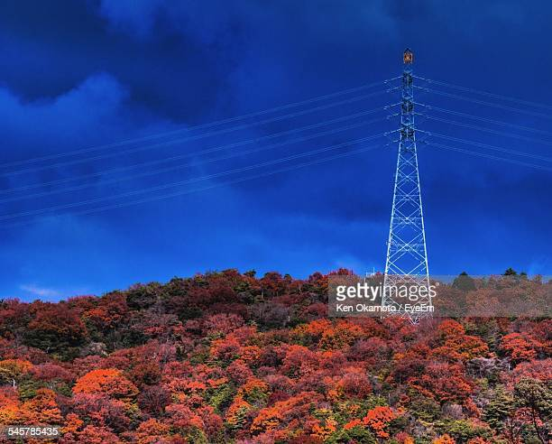 view of autumn trees with power line - 兵庫県 ストックフォトと画像