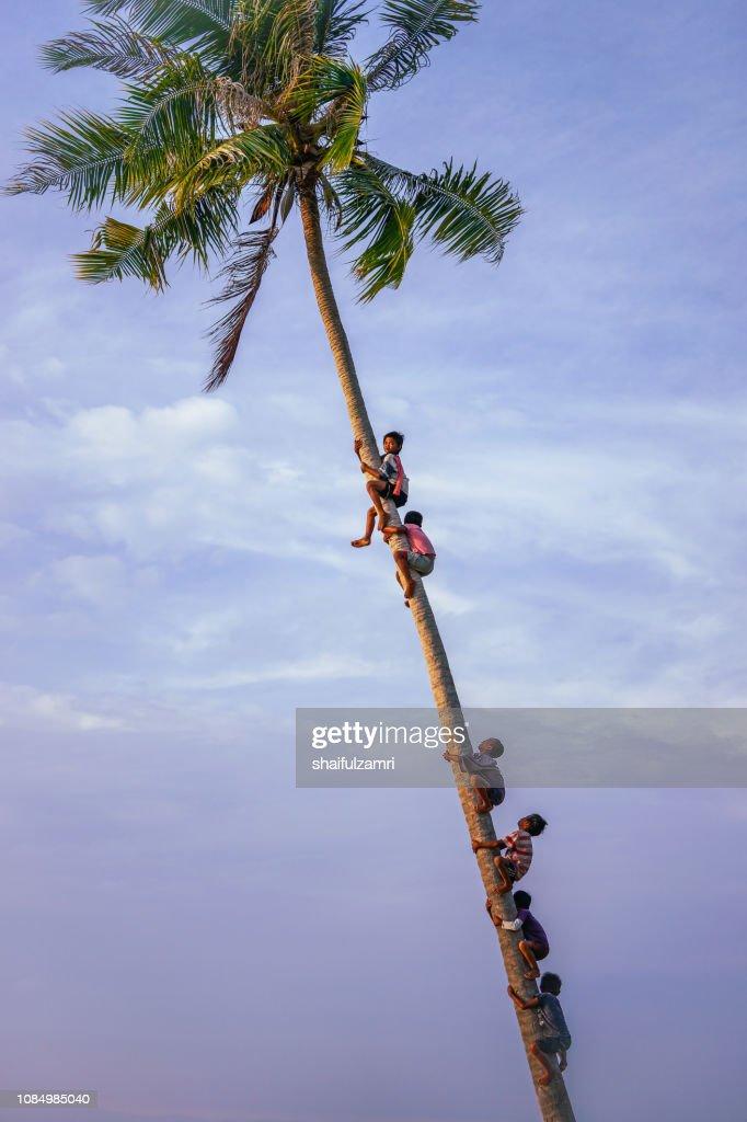 View of Bajau Laut kids climb a coconut tree at Bodgaya Island, Sabah, Malaysia. : Stock Photo