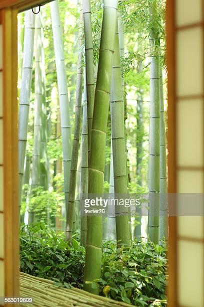 view of bamboo through shoji door,kyoto - 和室 ストックフォトと画像
