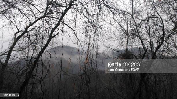 view of bare tree and mountain in foggy weather - forrest compton stock pictures, royalty-free photos & images