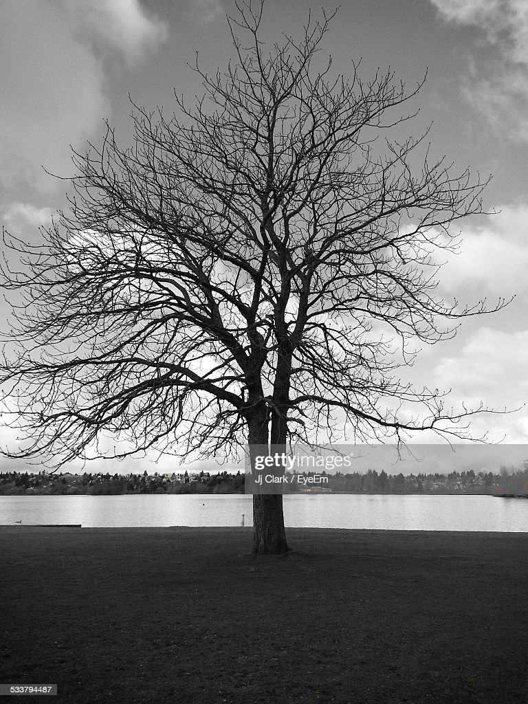 View Of Bare Tree By Lake, Forest In Background : Foto stock