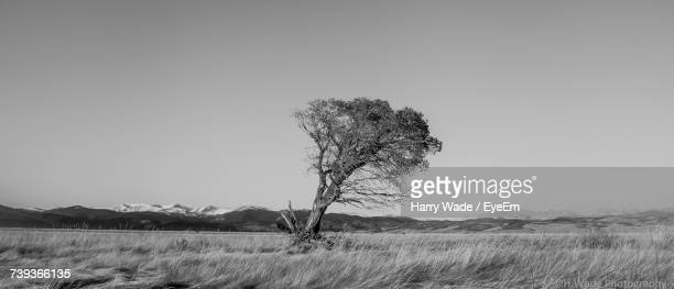View Of Bare Tree On Landscape Against Clear Sky