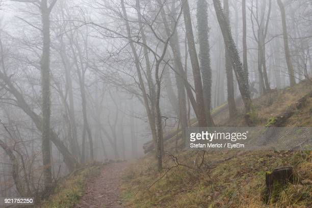 View Of Bare Trees In Foggy Weather