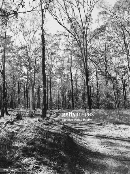 View Of Bare Trees In Forest