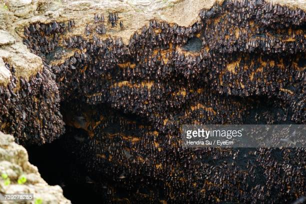 View Of Bats In Cave