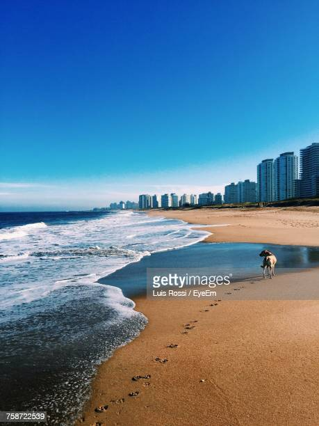 view of beach against blue sky - montevideo stock pictures, royalty-free photos & images