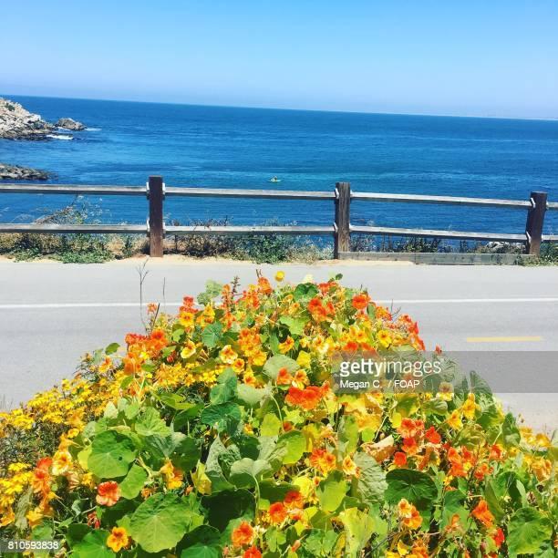 View of beach, Monterey, California