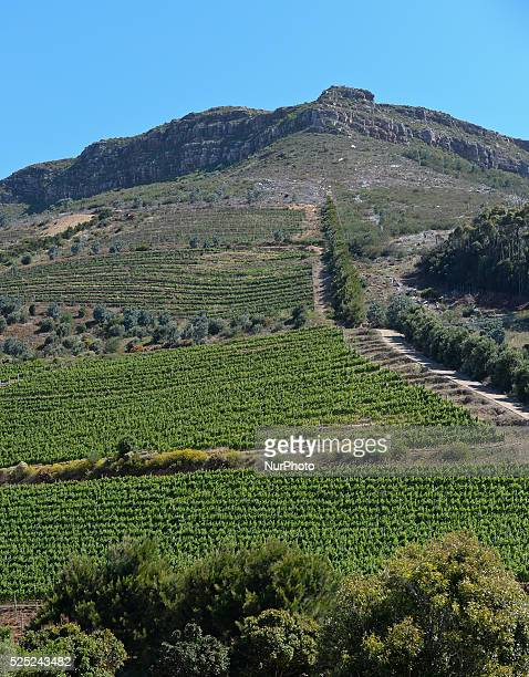 A view of Beau Constancia Wine Estate winiards Constantia Valley Wine Route Cape Town South Africa