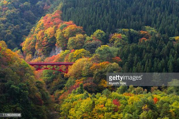 view of beautiful autumn scene with read bridge in yamada-onsen village in nagano, japan - prefectura de iwate fotografías e imágenes de stock