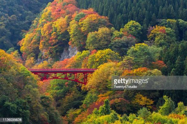 view of beautiful autumn scene with read bridge in yamada-onsen village in nagano, japan - gunma - fotografias e filmes do acervo