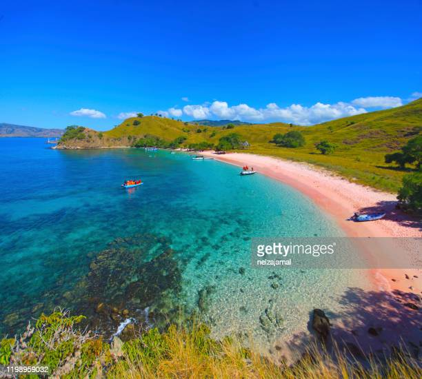 view of beautiful pink beach at flores island, indonesia - flores indonesia fotografías e imágenes de stock