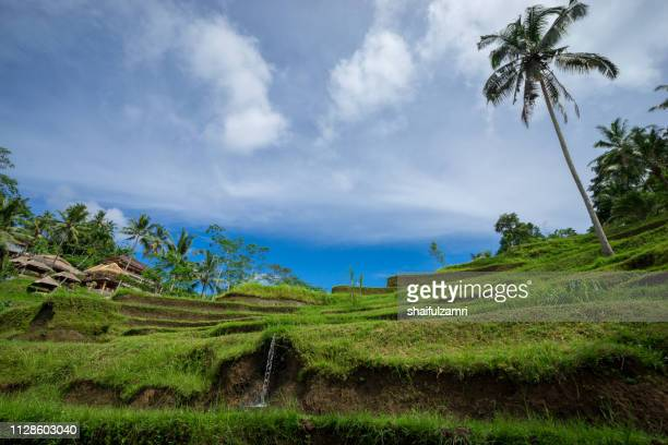 View of beautiful rice terraces in morning light near Tegallalang village, Ubud, Bali, Indonesia.