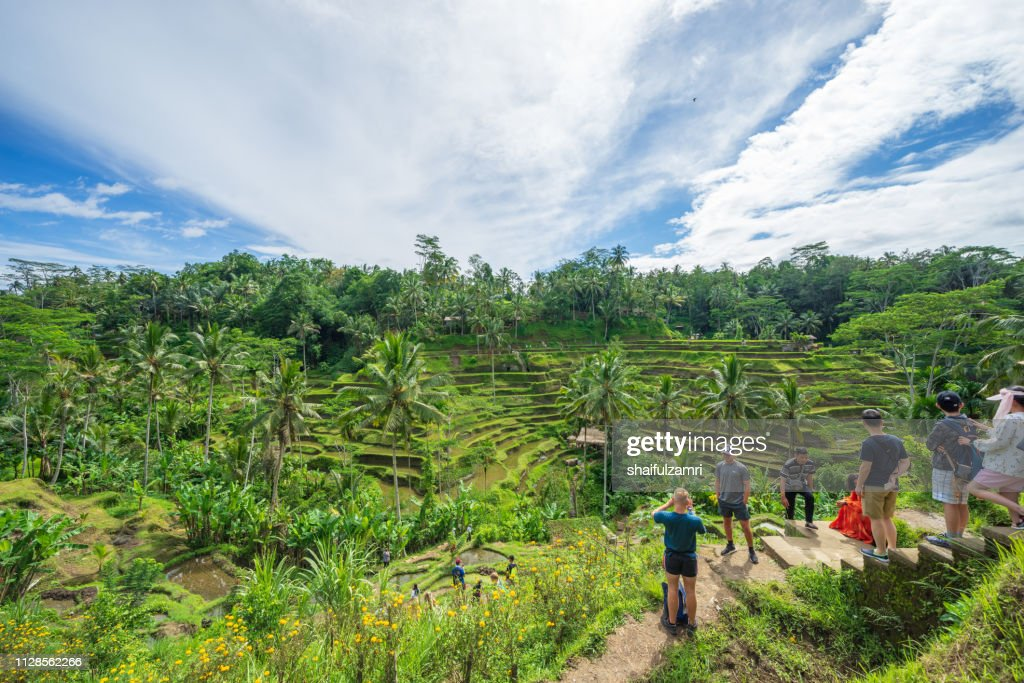 View of beautiful rice terraces in the morning light near Tegallalang village, Ubud, Bali, Indonesia. : Stock Photo