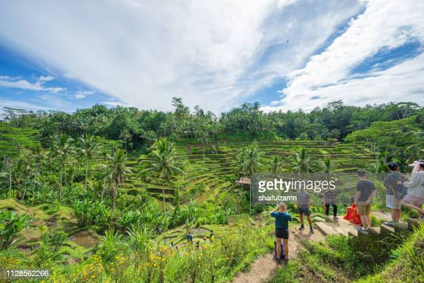 view of beautiful rice terraces in the morning light near tegallalang village, ubud, bali, indonesia. - shaifulzamri stockfoto's en -beelden