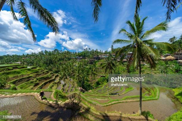 View of beautiful rice terraces in the morning light near Tegallalang village, Ubud, Bali, Indonesia.