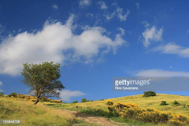 view of beautiful scenery - molise foto e immagini stock