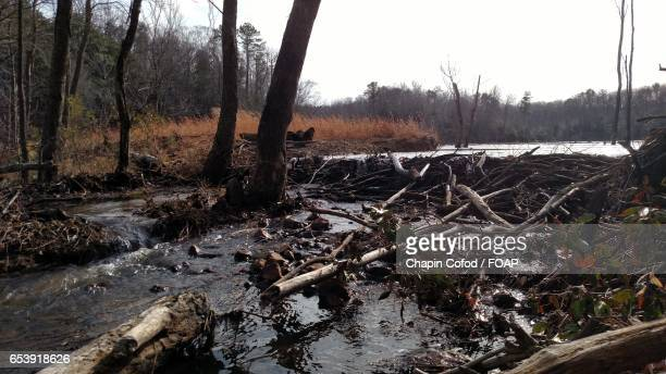 view of beaver dam - beaver dam stock pictures, royalty-free photos & images