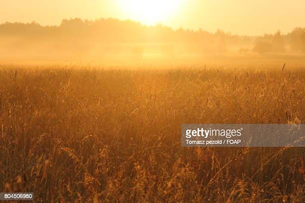 view of  bialowieza forest at sunrise - bialowieza forest stock pictures, royalty-free photos & images
