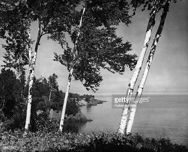 View of birch trees on the shore of Lake Superior near Duluth Minnesota circa 1900s