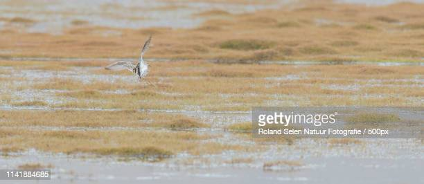 View of bird flying over marshy land