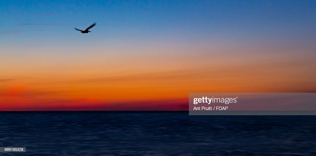 View of bird flying over sea at sunset : Stock Photo
