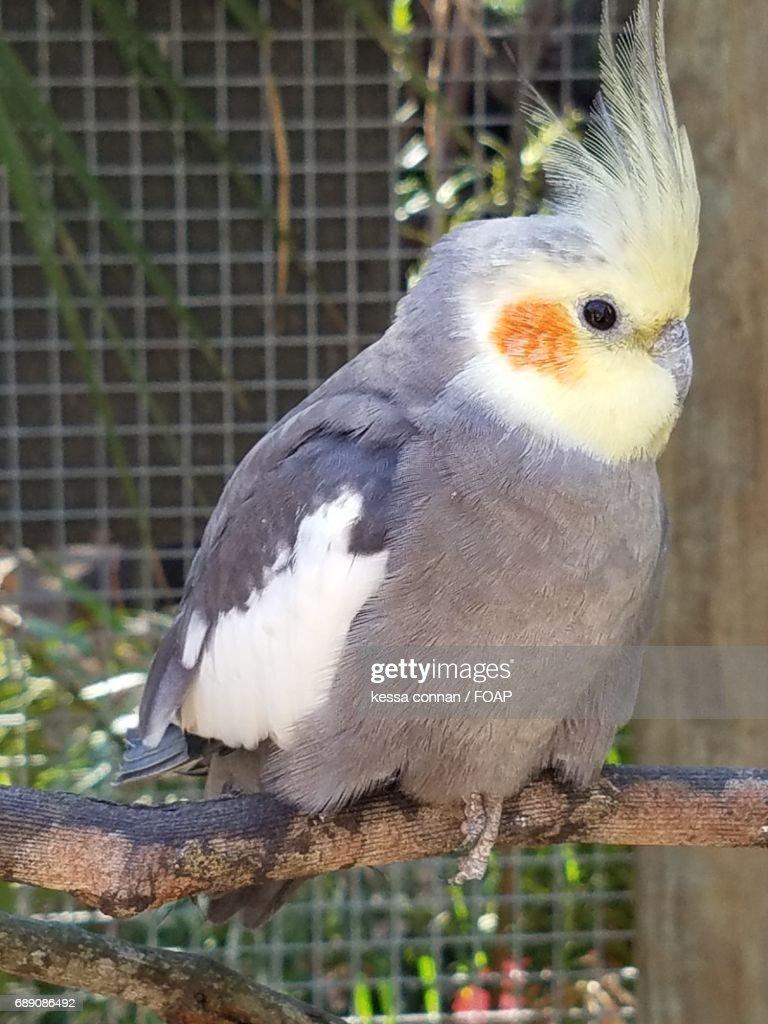 View of bird in zoo : Stock Photo