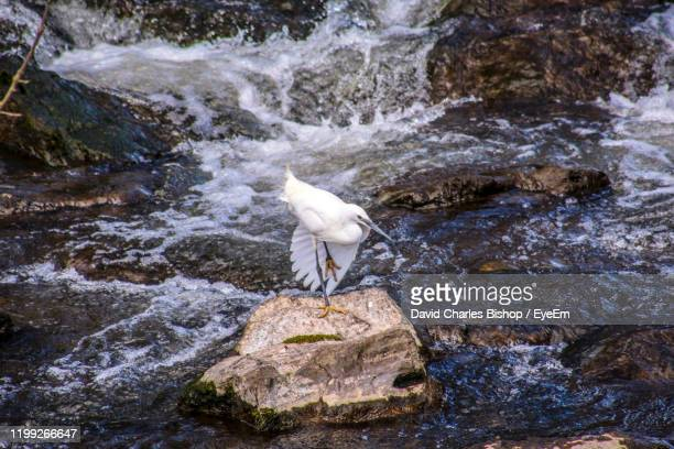 view of bird on rock in river - stream stock pictures, royalty-free photos & images