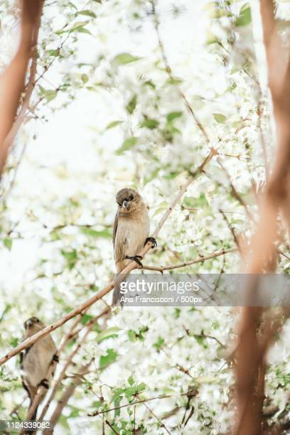 View of bird standing on blossom branch