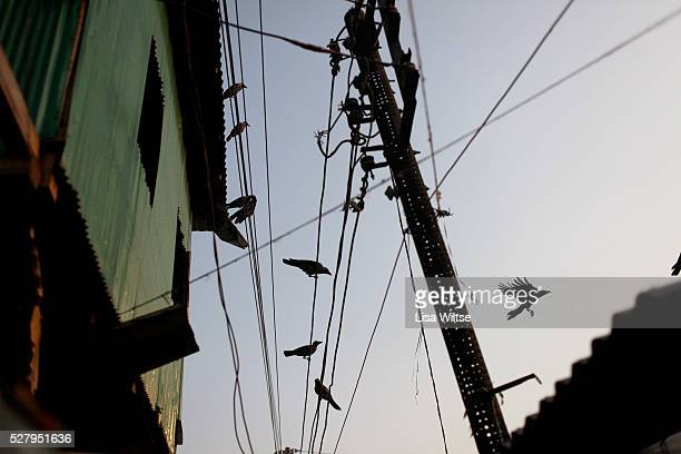 A view of Birds on electrical wires in the country's largest brothel in Daulatdia Bangladesh on the banks of the Padma River The alleyways of the...